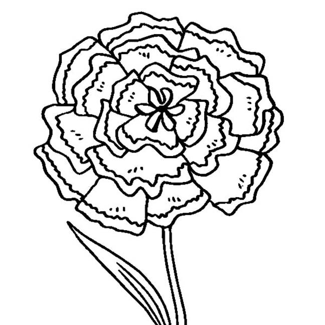 Carnation Flower Printable Coloring Page