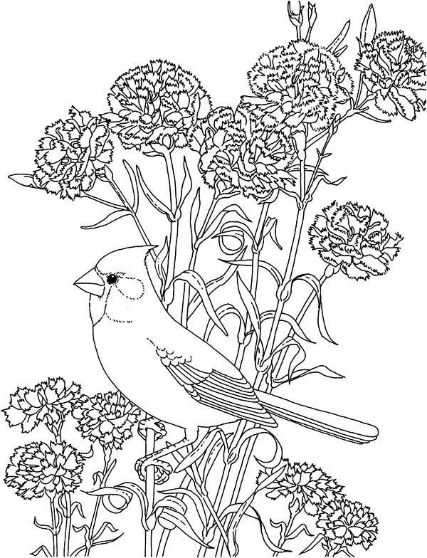 Carnation Flowers And Cardinal Coloring Page