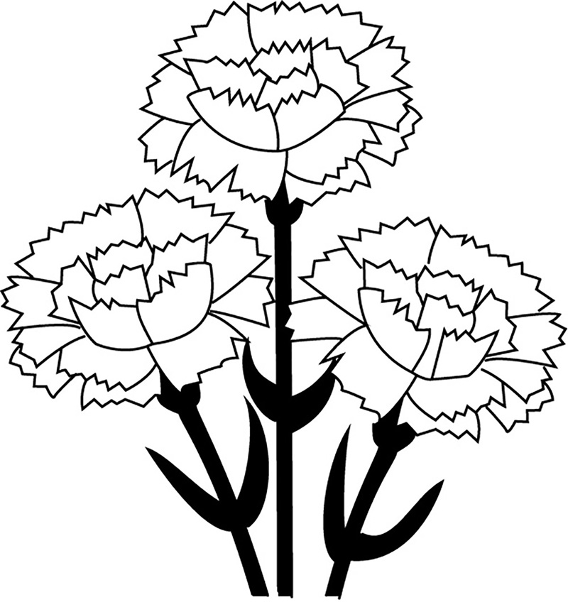 Carnations Coloring Page
