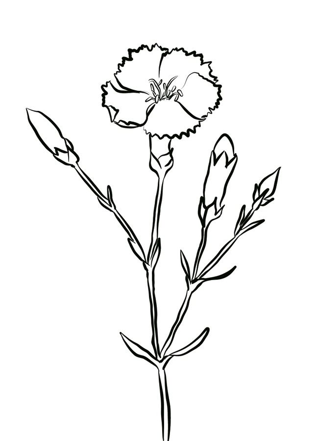 Carnations Coloring Pages