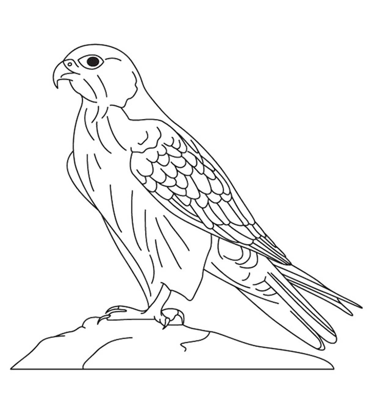 Falcon Printable Coloring Page