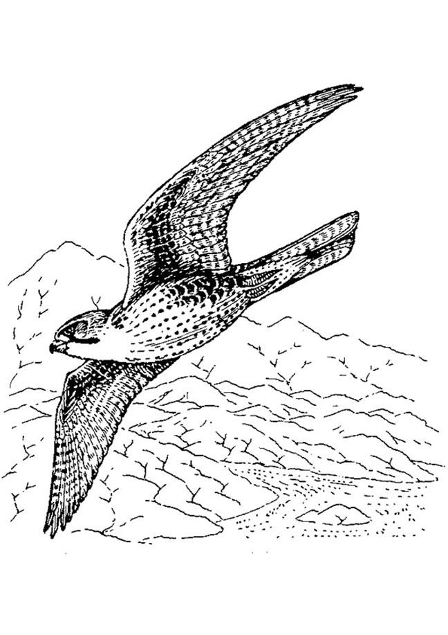 Falcon Scene Coloring Page