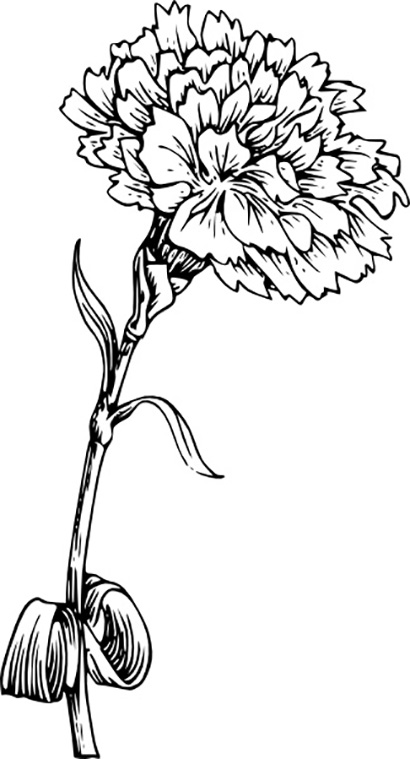 Flower Carnation Coloring Page