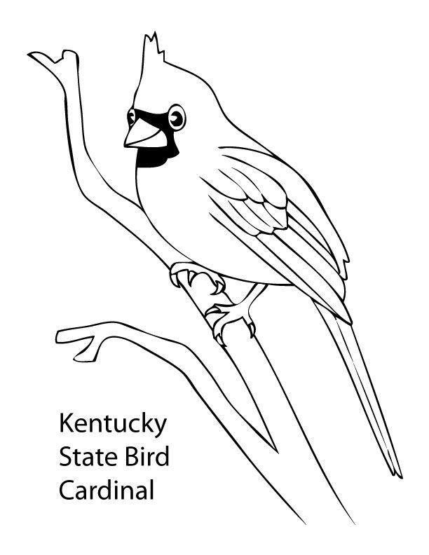 Kentucky Cardinal Coloring Pages