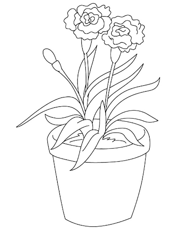 Potted Carnation Coloring Page