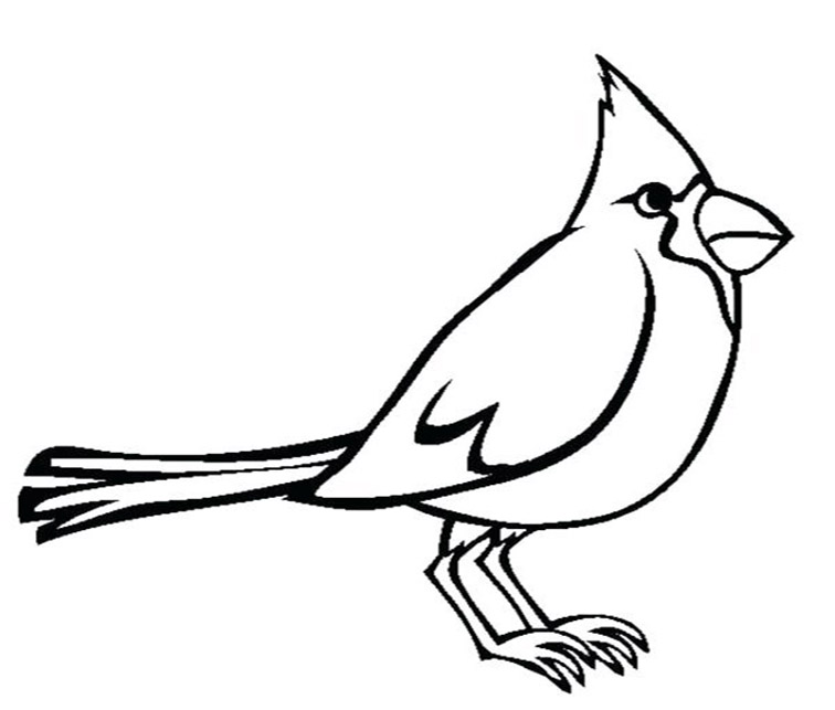 Simple Cardinal Coloring Pages