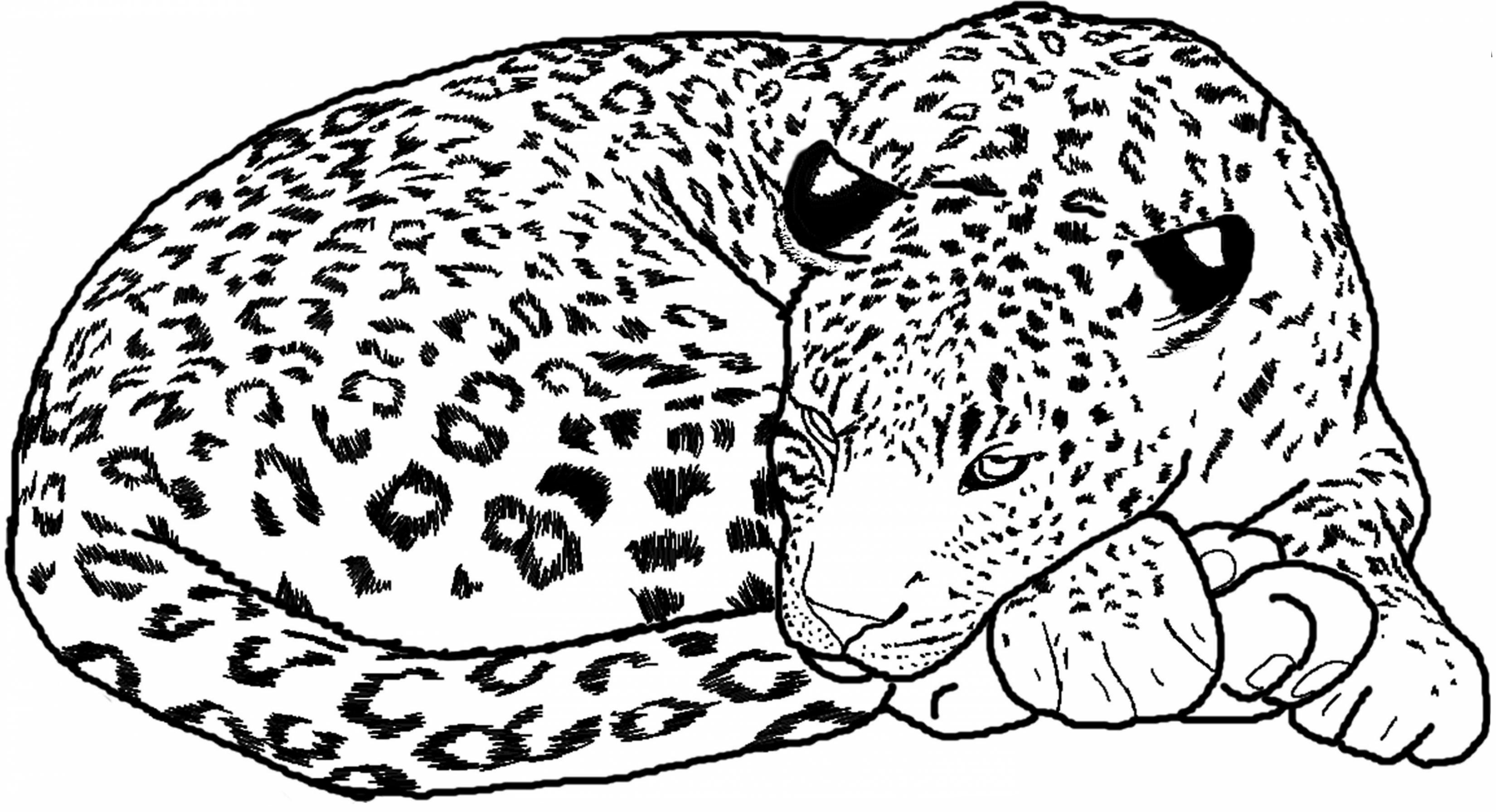 Sleeping Leopard Coloring Pages