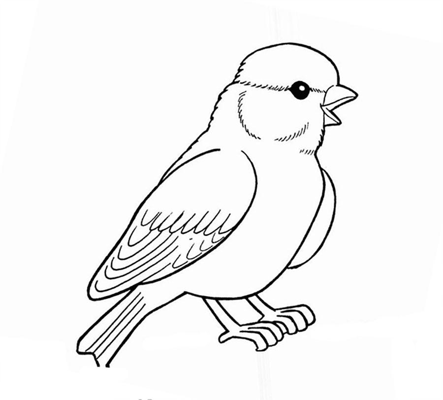 Baby Sparrow Coloring Page