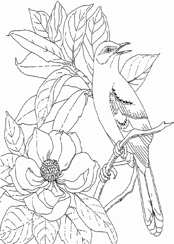 Bird In Magnolia Flowers Coloring Page