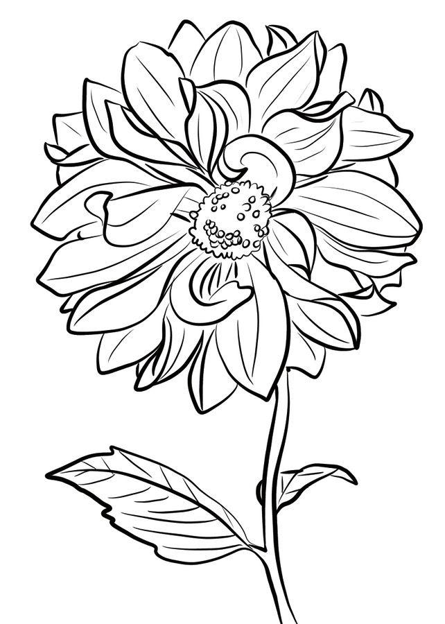 Cactus Dahlia Coloring Page