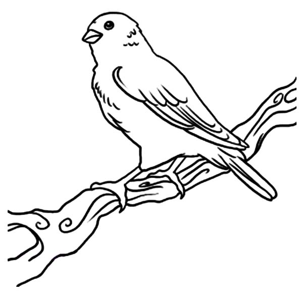 Canary On Branch Coloring Pages