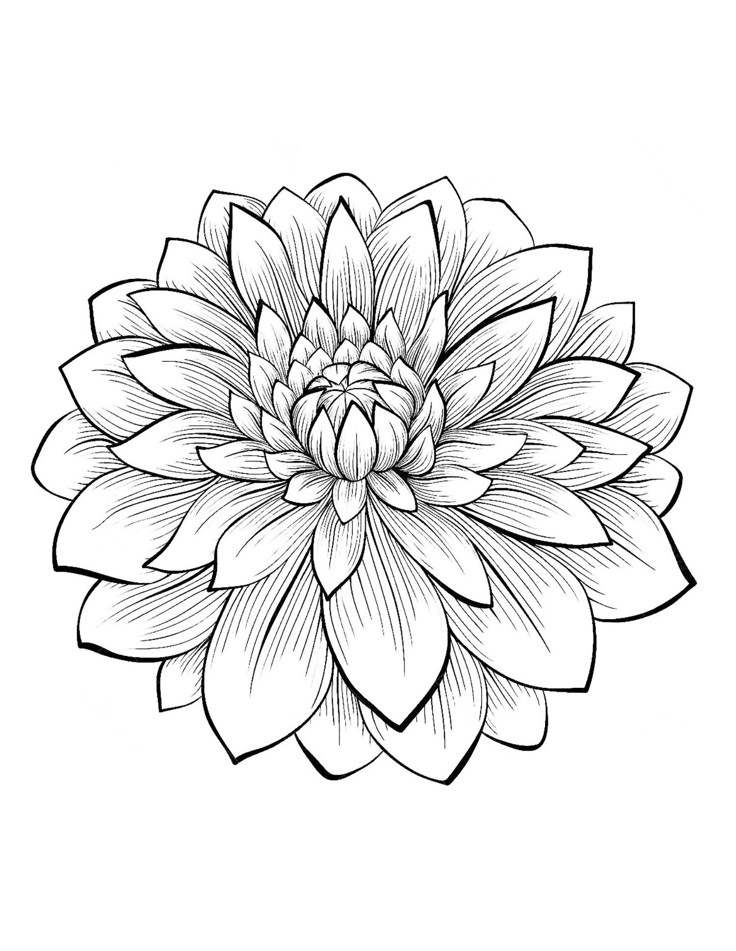 Dahlia Coloring Pages