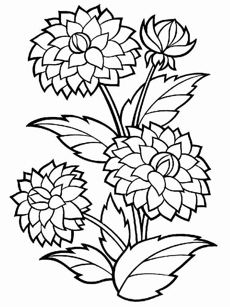 Dahlia Flowers And Stems Coloring Page