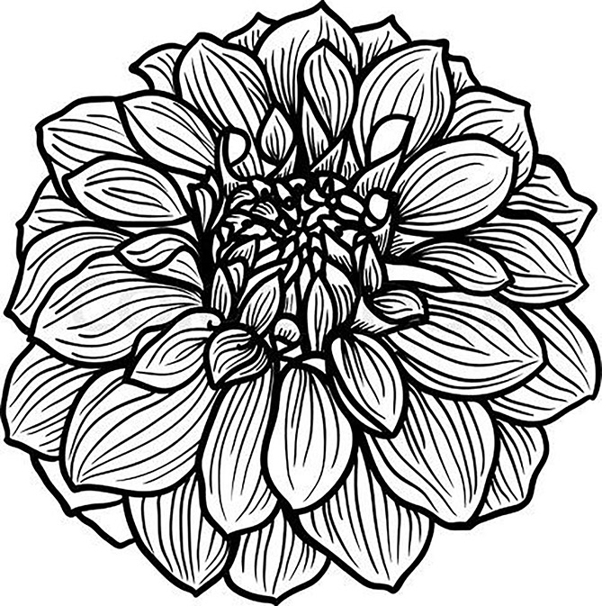 Detailed Dahlia Flower Coloring Page