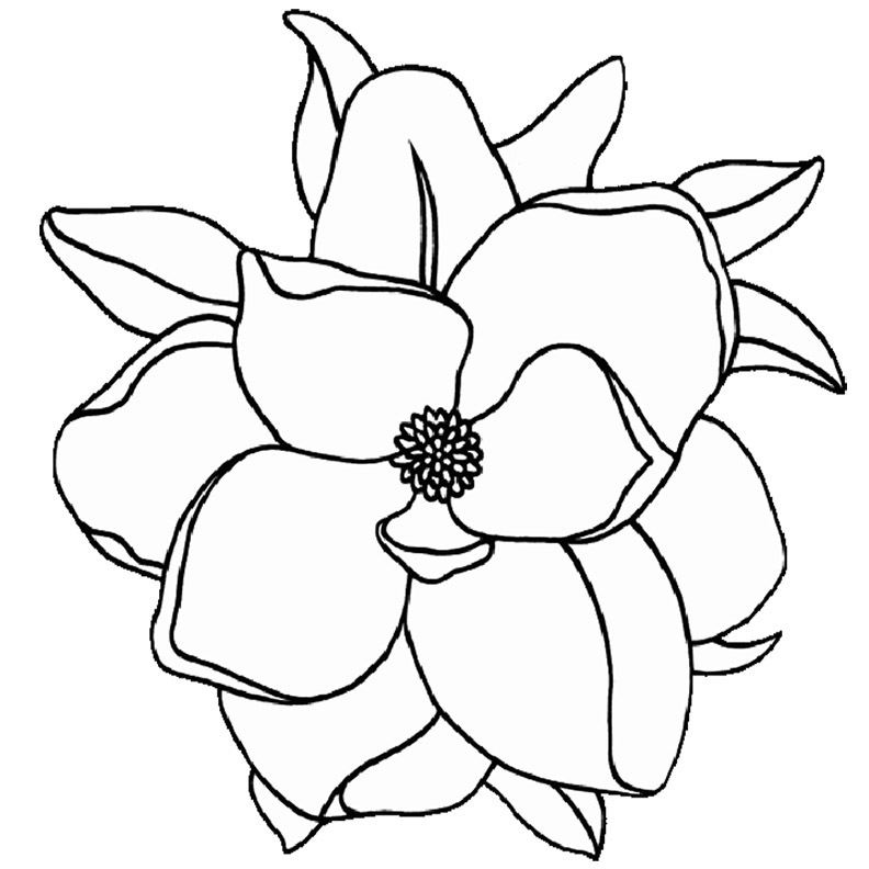 Easy Magnolia Flower Coloring Pages