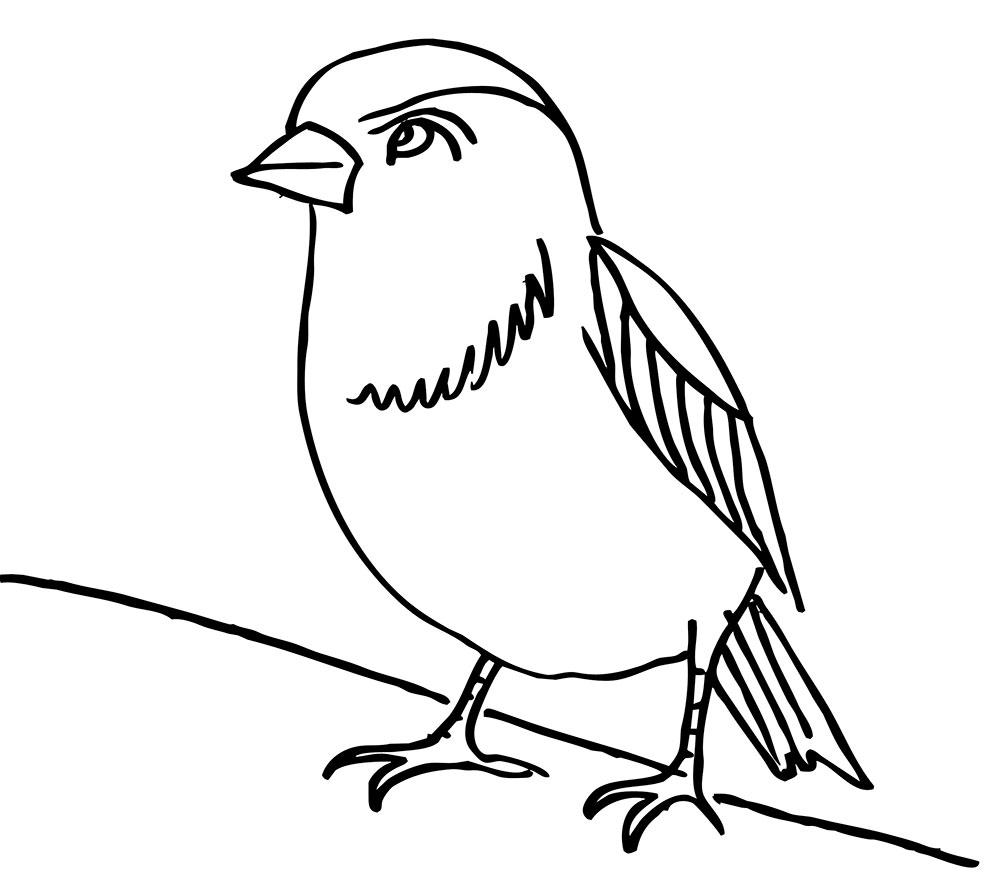 Easy Sparrow Coloring Page