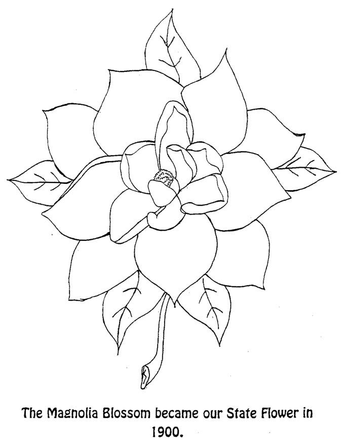 Magnolia Blossom State Flower Coloring Page