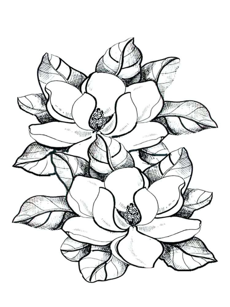 Magnolia Flowers Coloring Page