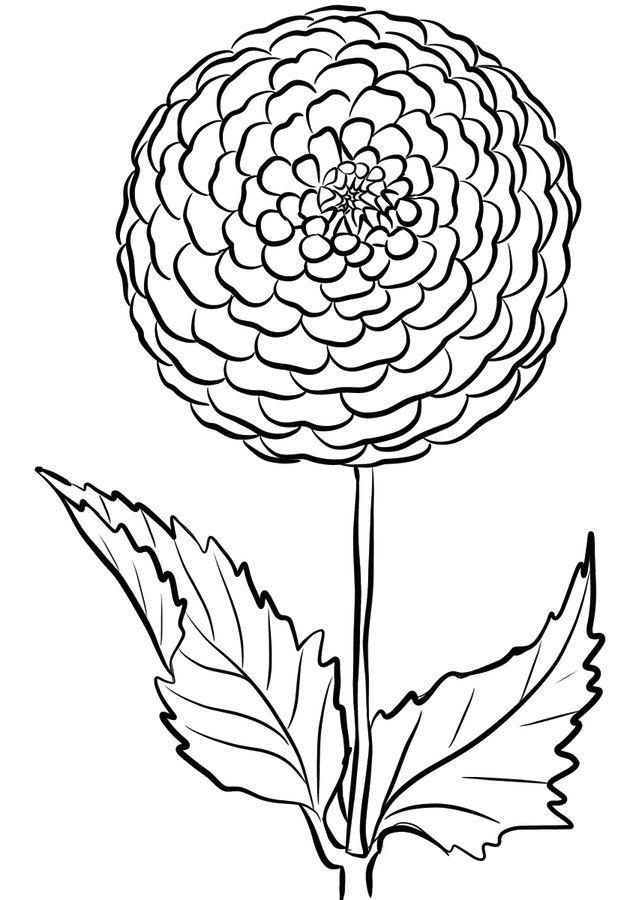 Pom Pon Dahlia Coloring Page