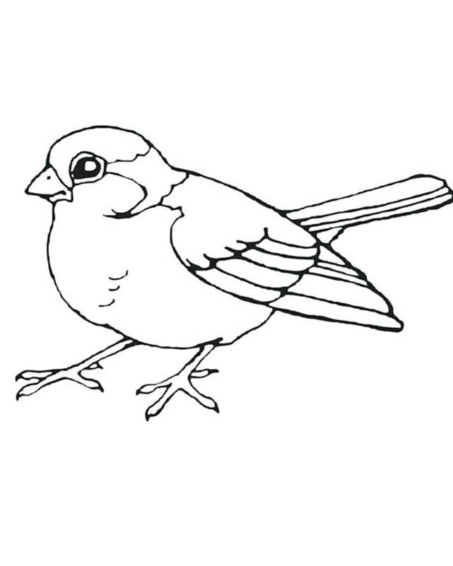 Sparrow Bird Coloring Page