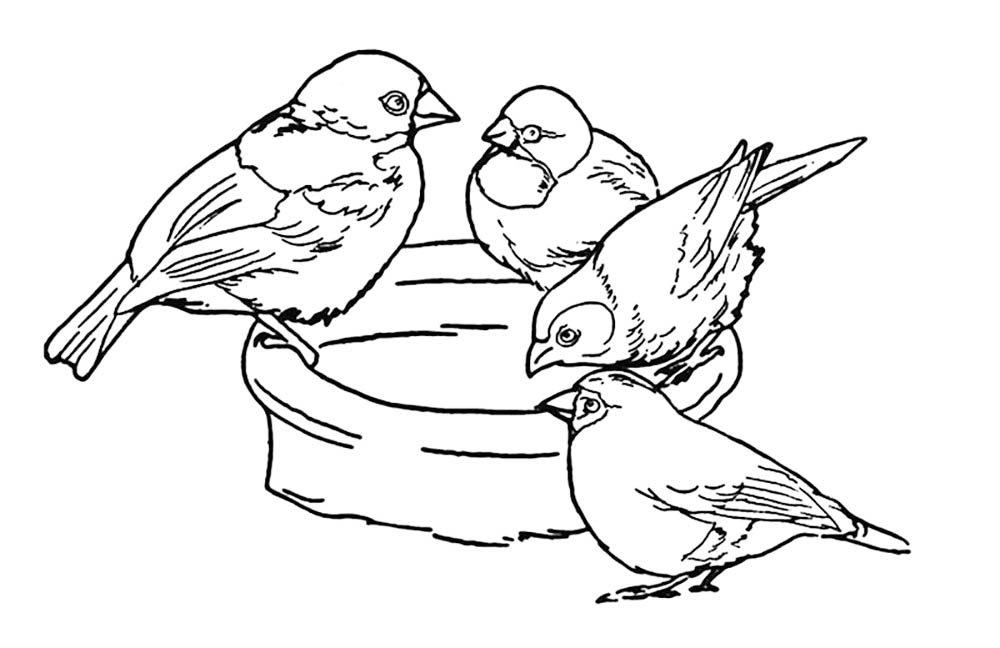 Sparrow Drinking From Birdbath Coloring Page