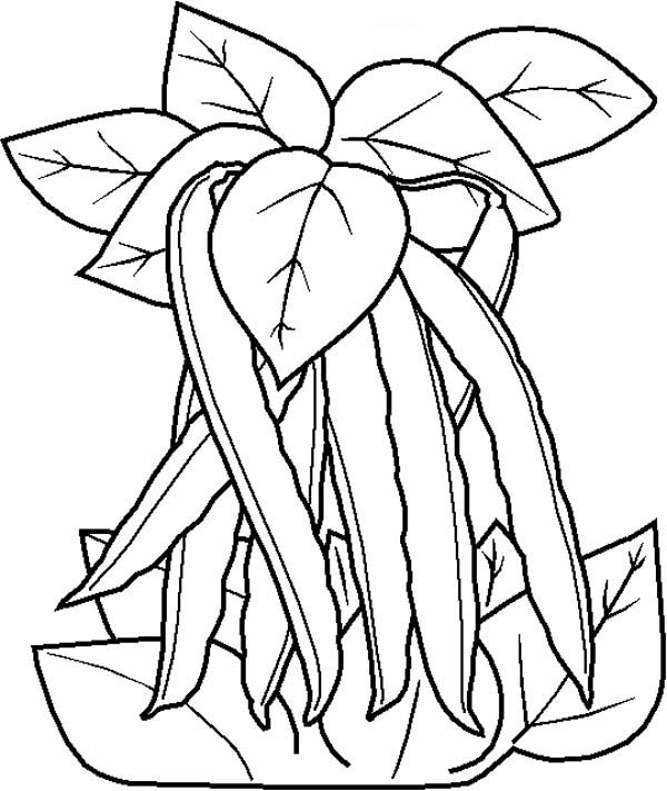 Beans On Vine Coloring Page