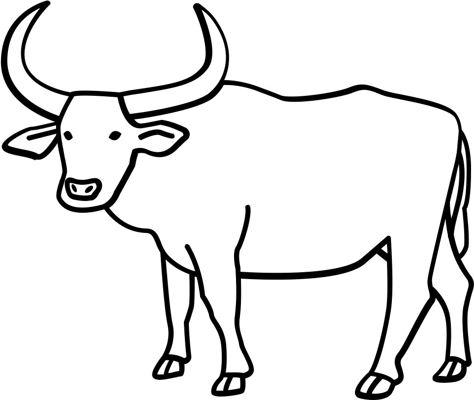 Buffalo Steer Coloring Page