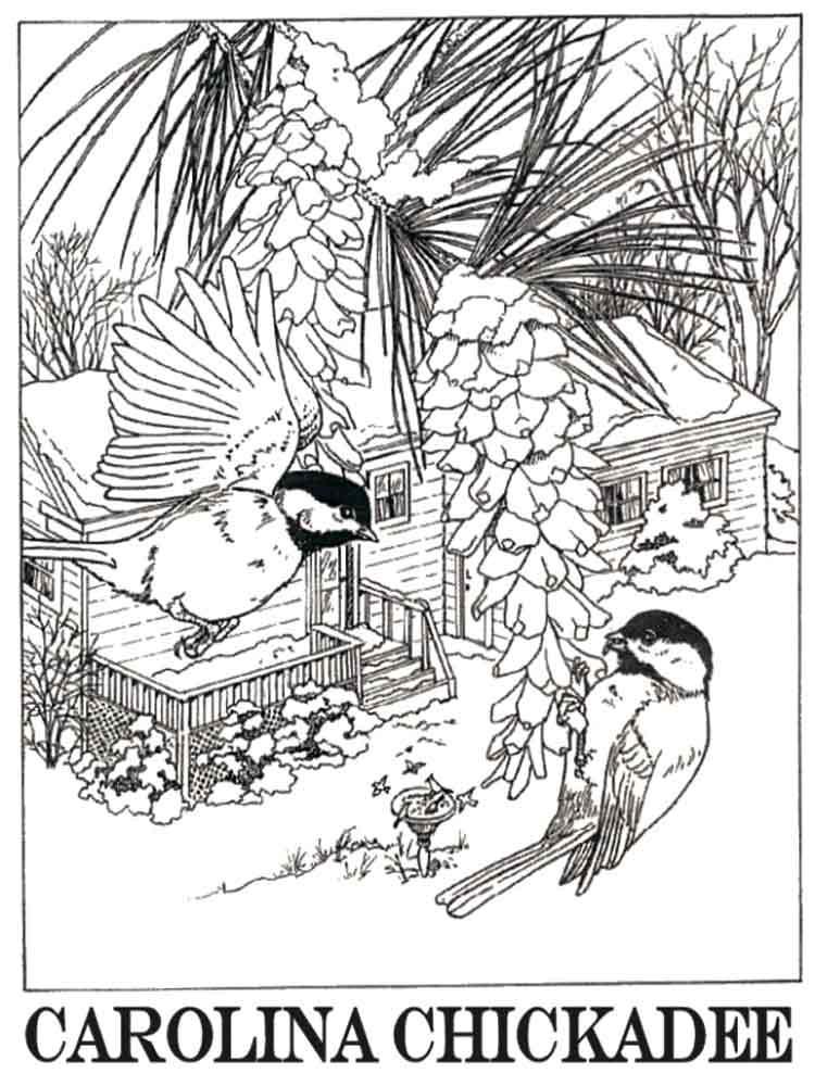 Carolina Chickadee Coloring Page