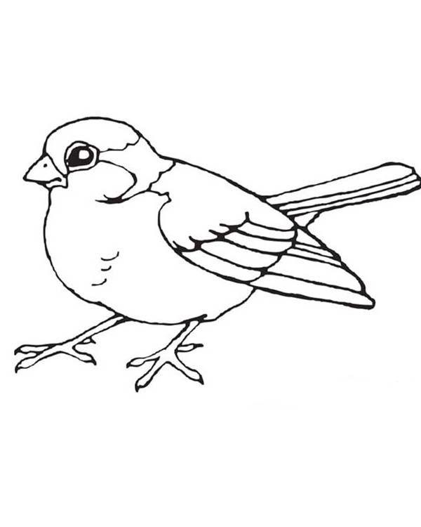 Chickadee Coloring Page