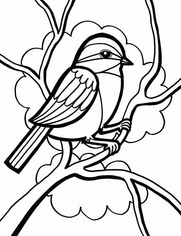 Chickadee Coloring Pages