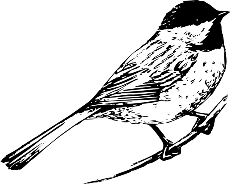 Chickadee Printable Coloring Pages