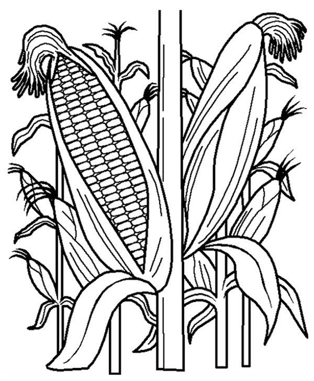 Corn Field Coloring Pages