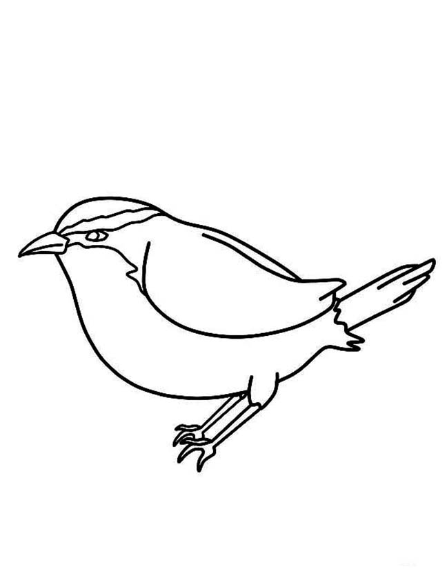 Easy Chickadee Coloring Pages