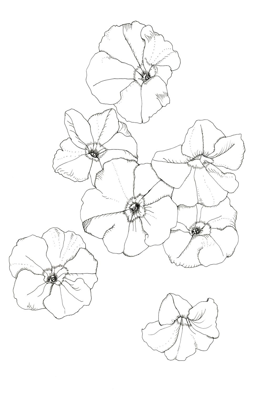 Easy Petunia Coloring Page
