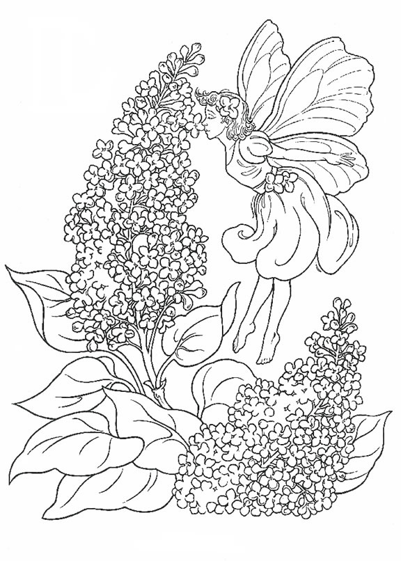 Fairy In The Lavender Coloring Page