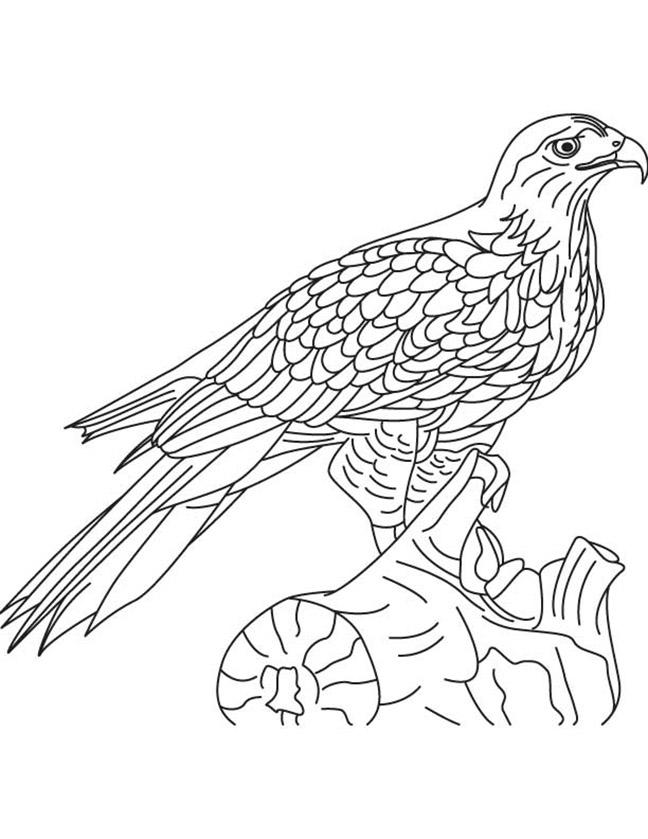 Hawk Coloring Page Printables