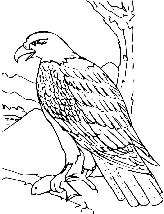 Hawk Coloring Page