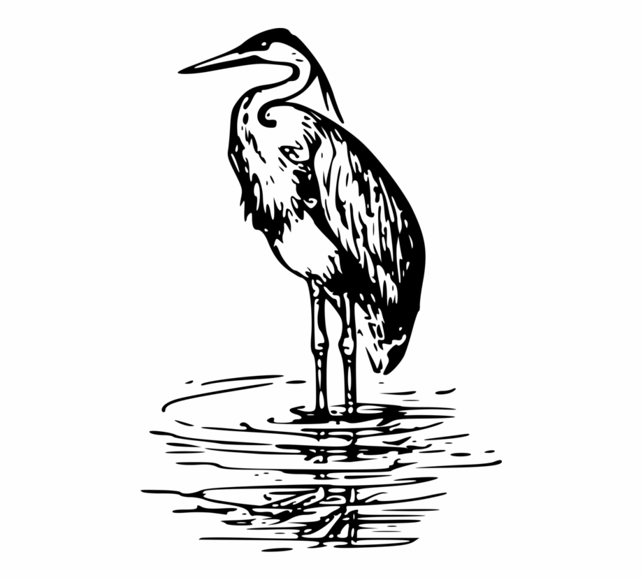 Heron In Water Coloring Page