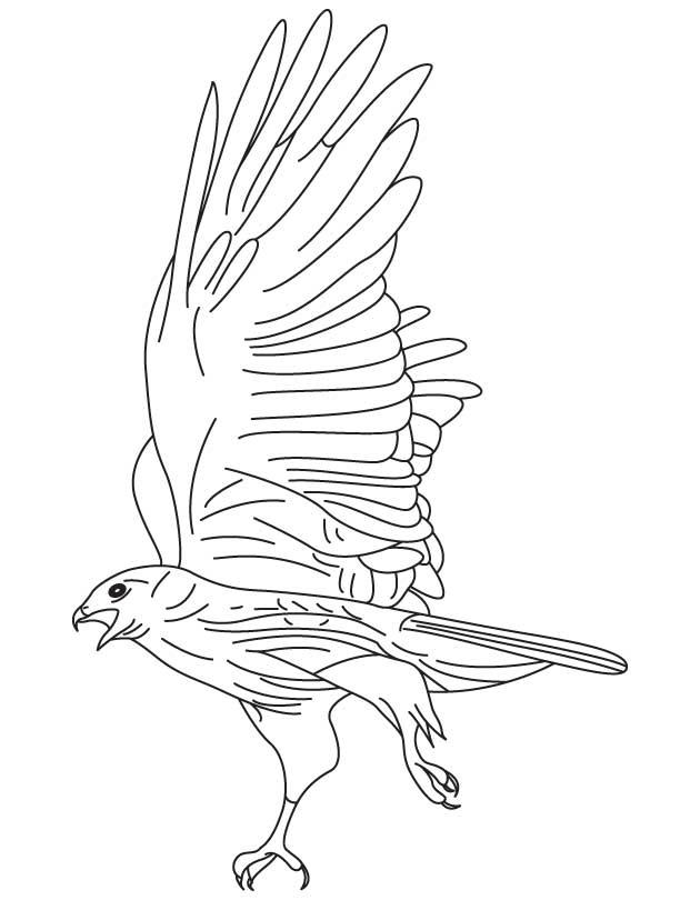 Landing Hawk Coloring Pages