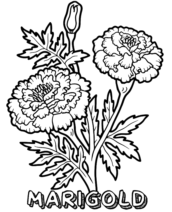 Marigold Coloring Pages
