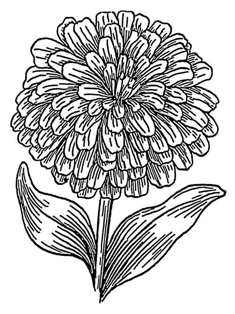 Marigold Printable Coloring Page