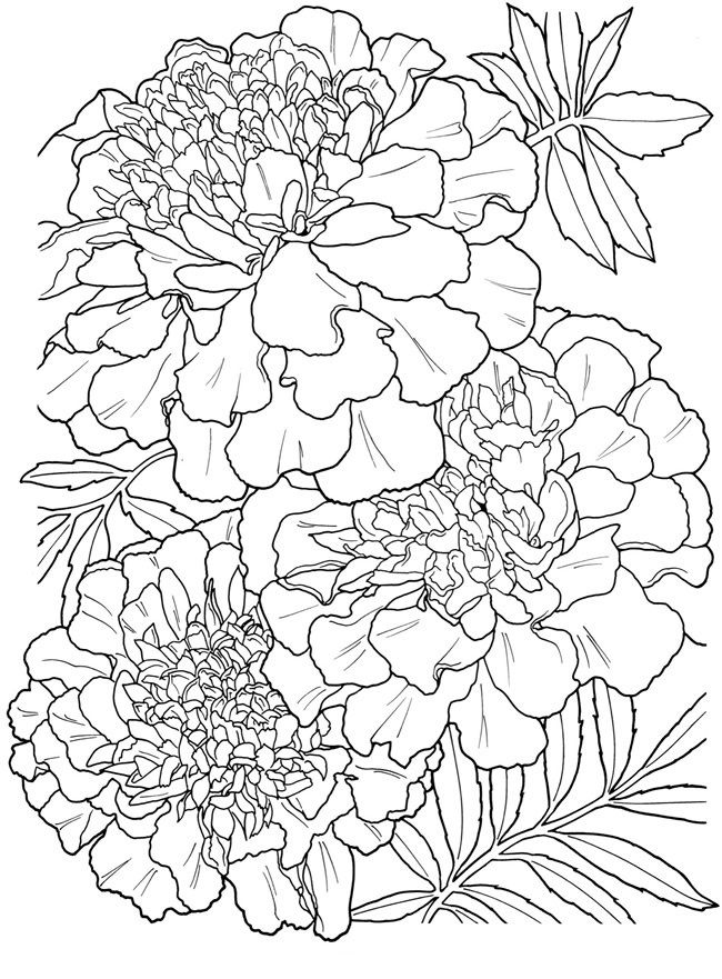 Marigolds Coloring Page