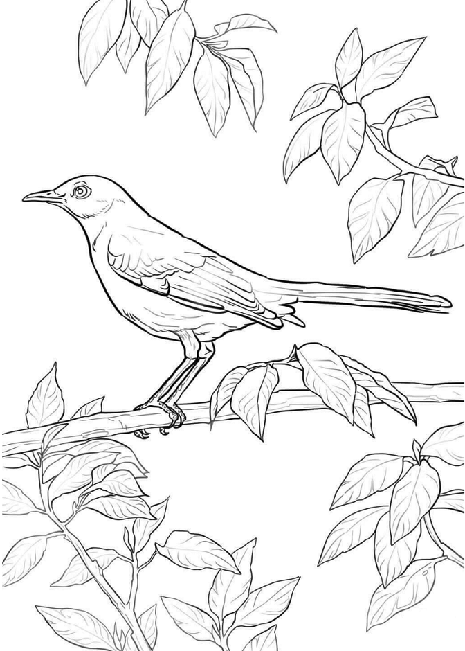 Mockingbird Coloring Pages