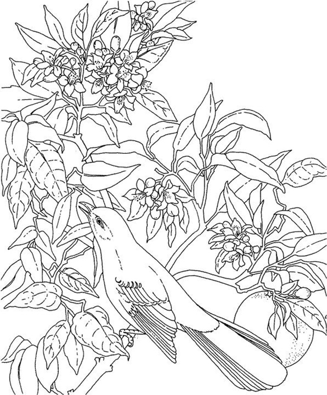 Mockingbird Scene Coloring Pages