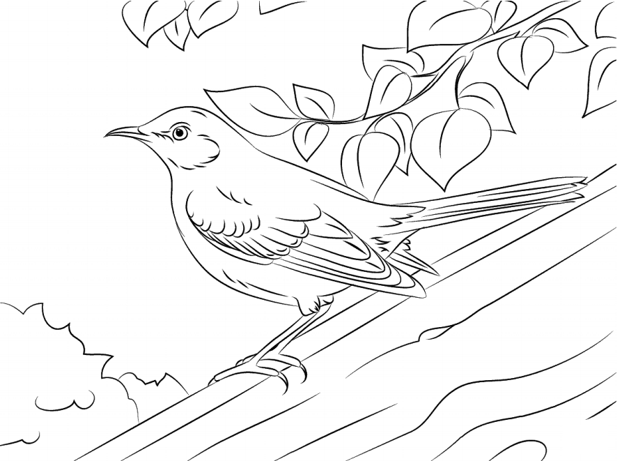 Mockingbird On Branch Coloring Pages