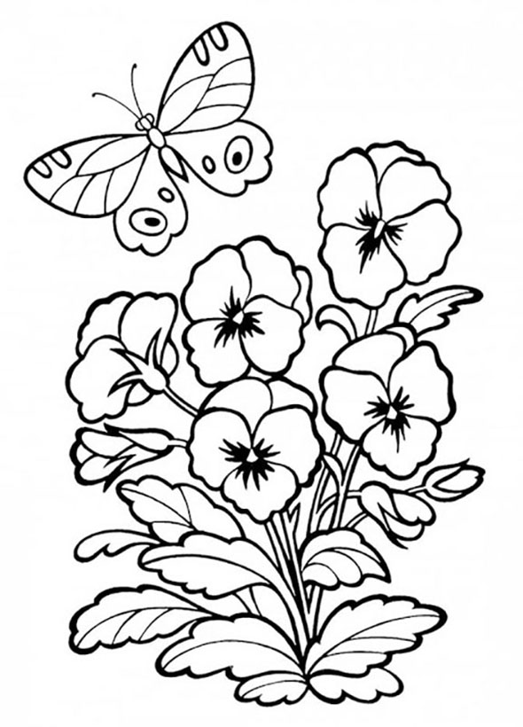 Pansies Coloring Pages