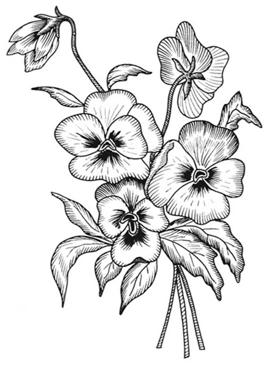 Pansy Bouquet Coloring Pages