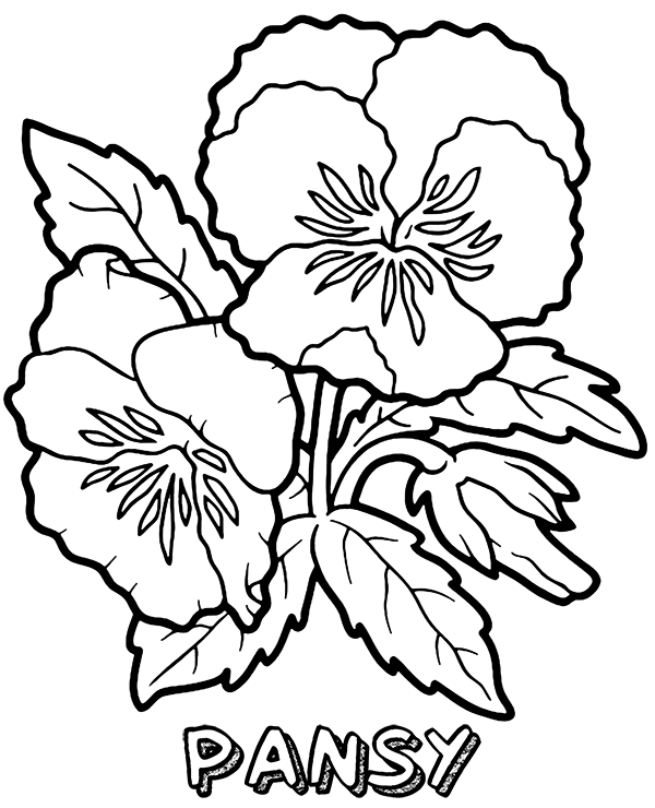 Pansy Coloring Pages