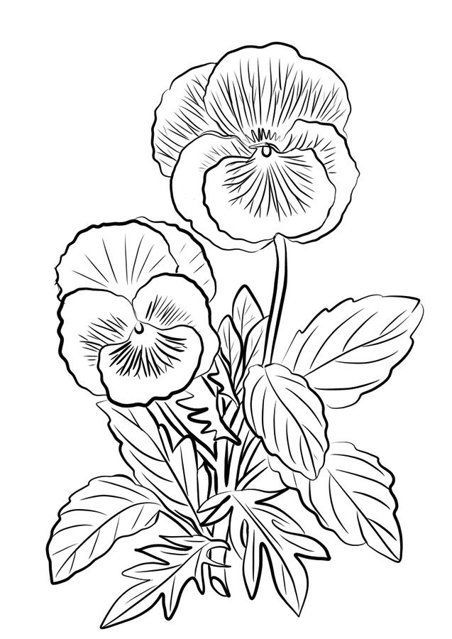 Pansy Flowers Coloring Page