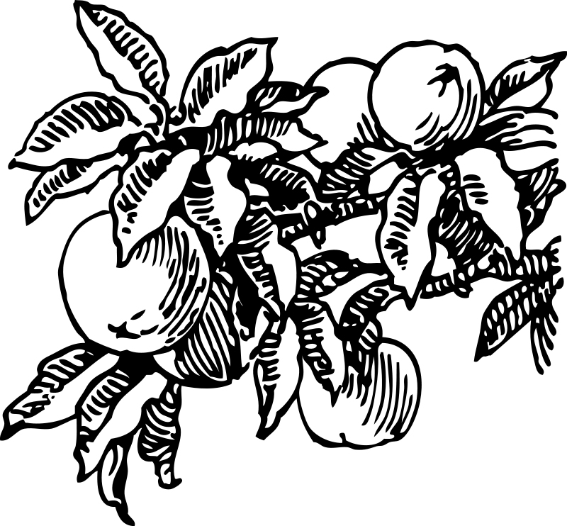 Peaches On Trees Coloring Pages